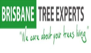 Brisbane #Tree Experts is the leading company providing the best #services of tree maintains, tree removal services with the professional staff having many years of experience. They use latest equipments in their services. To hire their services, please visit http://www.brisbanetreeexperts.com.au/