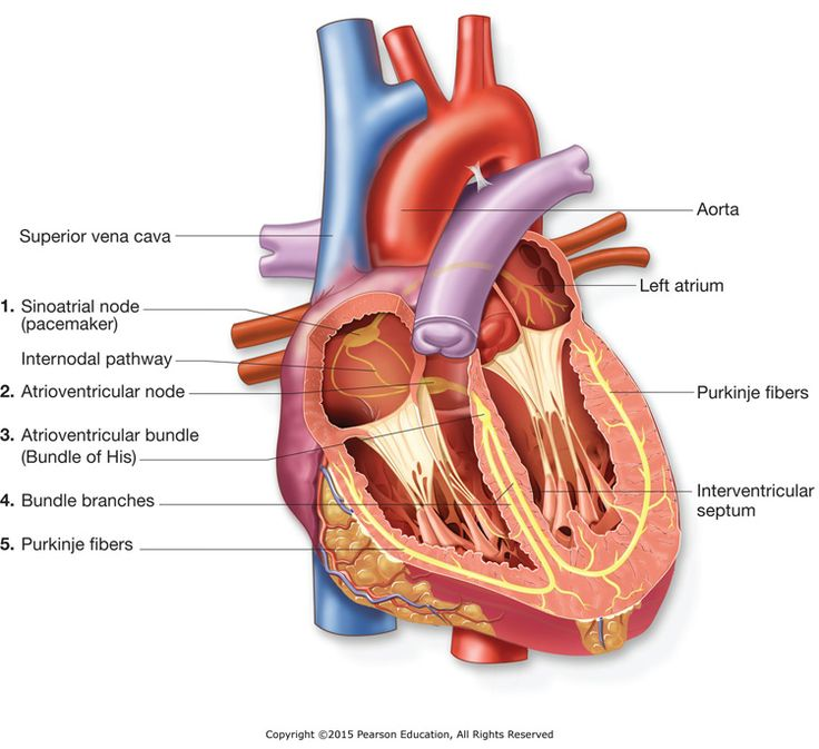 22 best school studies images on Pinterest | Anatomy, Anatomy ...