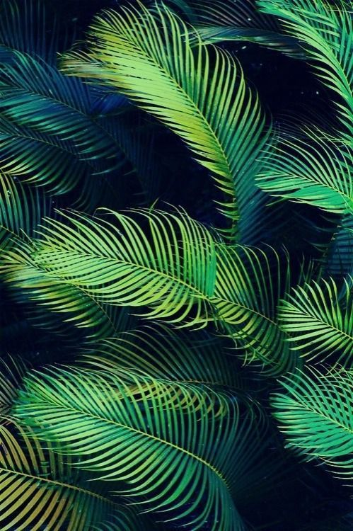 In love with this print. #palmier #green