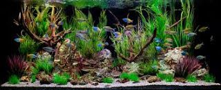 AQUARIUM SUPPLIES, ACCESSORIES AND EQUIPMENT: Asian Concept Aquarium Decor