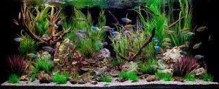 AQUARIUM SUPPLIES, ACCESSORIES AND EQUIPMENT: Asian Concept Aquarium Decor
