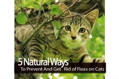 how to kill fleas on my cat