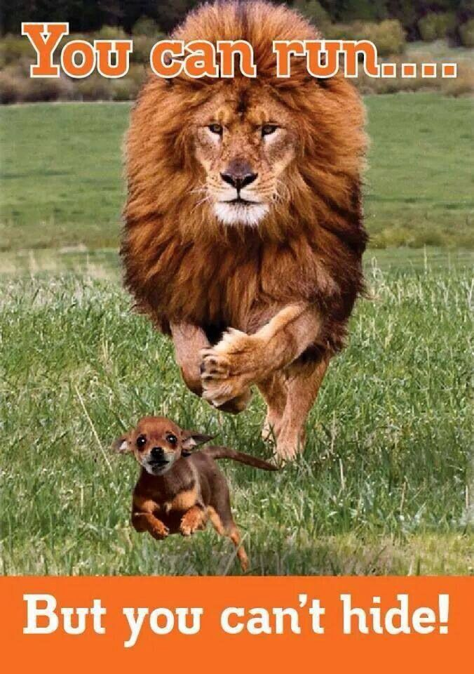 Nederlandse leeuw
