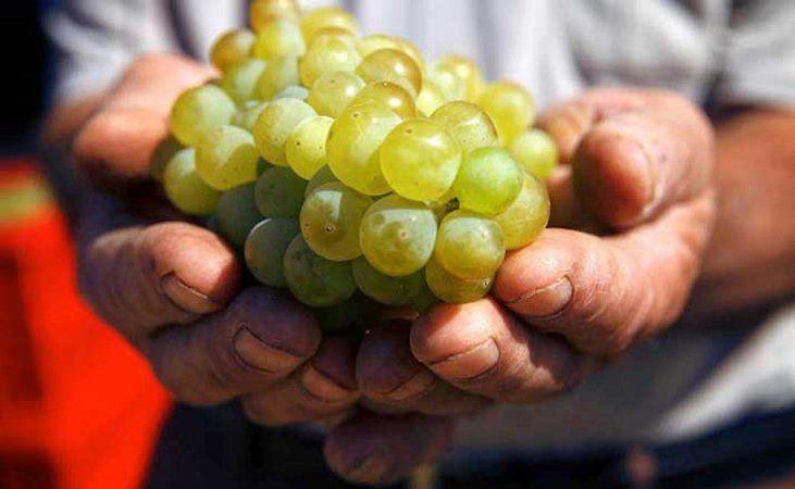 Armeńskie wino