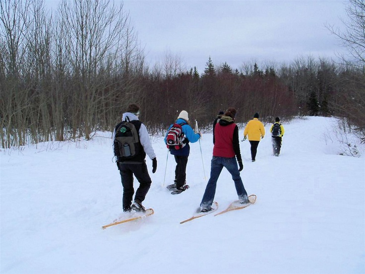 Snowshoeing in Wolfville Watershed Nature Preserve