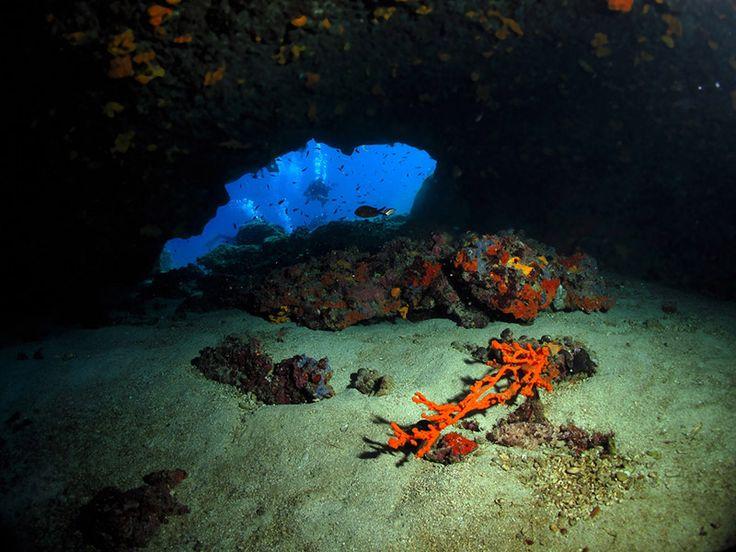 Seahorse Dive Center