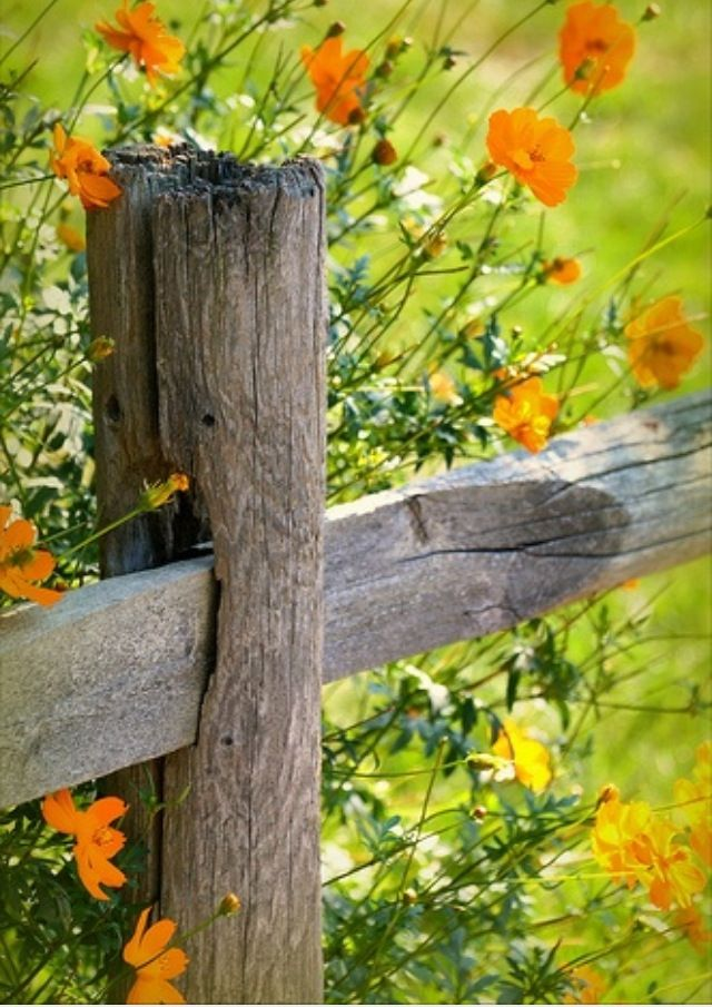 1000 Images About Old Barbed Wire Fences On Pinterest