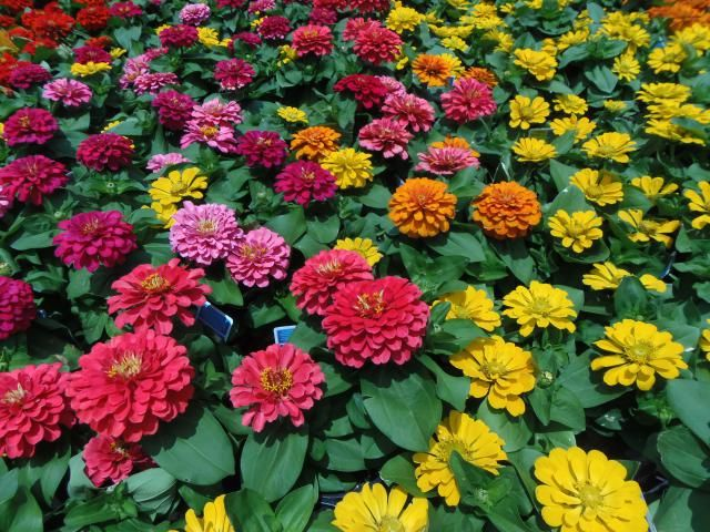 Here are 14 flowers that are easy to start from seed. Grab some seed packets, and save some cash.