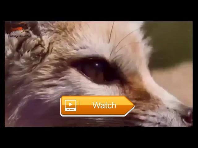 SUPER CUTE ANIMALS animal planet Nature documentary Discovery channel documentaries  National Geographic Documentary HD SUPER CUTE ANIMALS PLANET BBC Discovery Planet Animals Discovery channel documentaries SUPER  on Pet Lovers