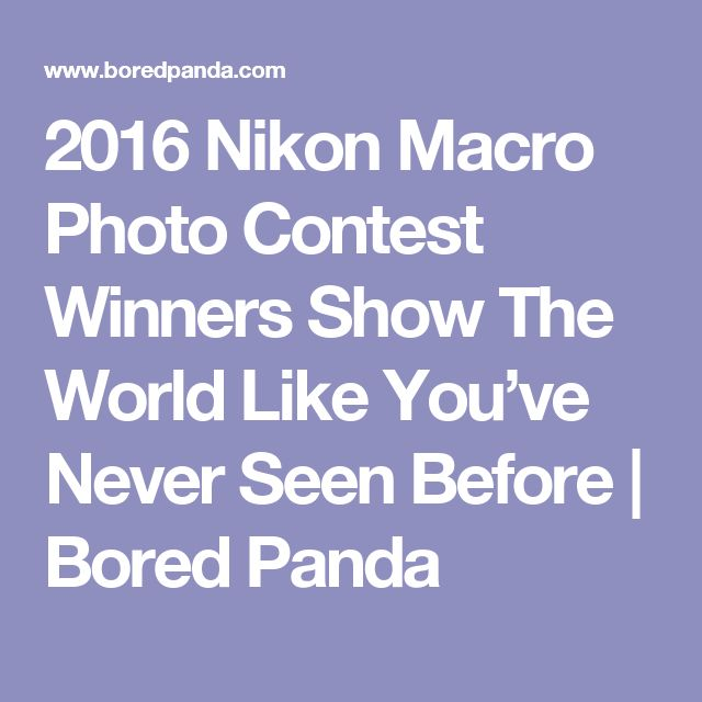 2016 Nikon Macro Photo Contest Winners Show The World Like You've Never Seen Before   Bored Panda