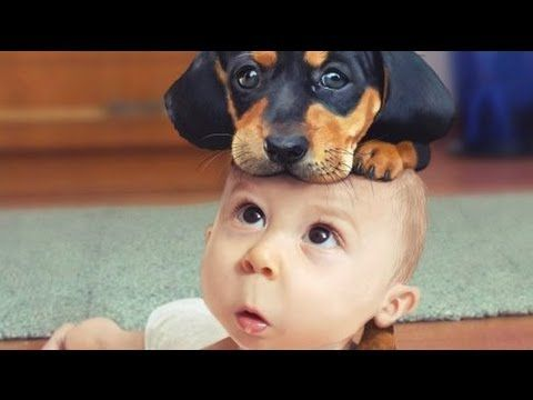 Most Funny Dog Videos 2014