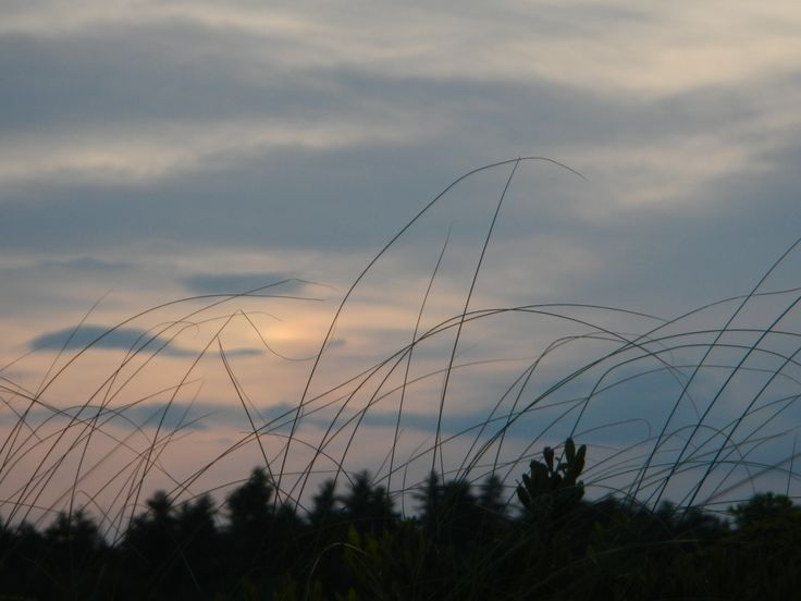 From low in the water, sunset seen through breeze-blown grass