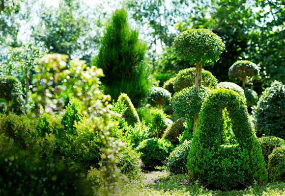 A delightful assortment of Tim Barbour-pruned topiaries, all housed at his topiary nursery in Evandale, Tasmania.
