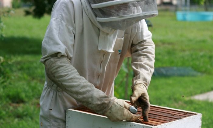 buying-bees
