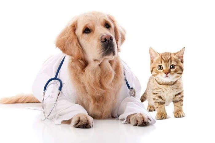 Why Pet Plans Are Vital For Your Career In 2020 Pets Animals Pet Plan