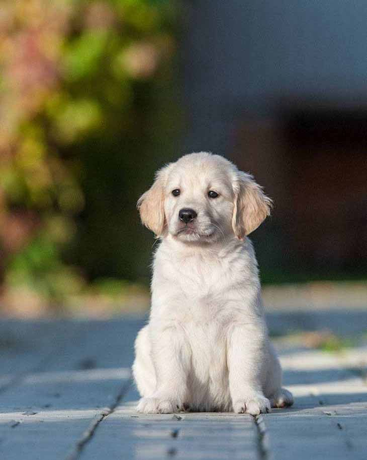 What do you think would be some great puppy names for this cute Golden Retriever?