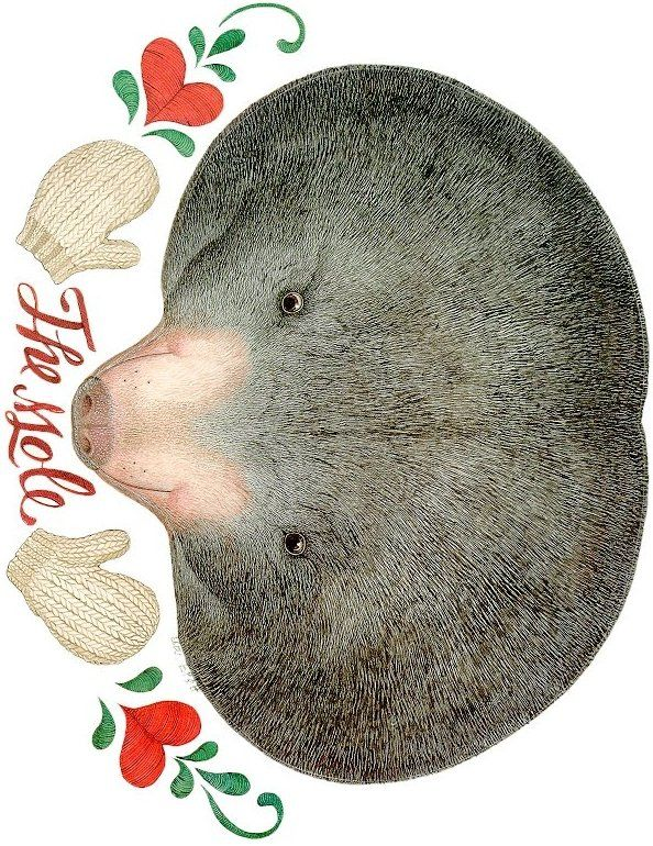 Laminate printable mole mask.