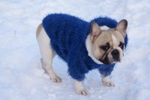 Вязание для собак