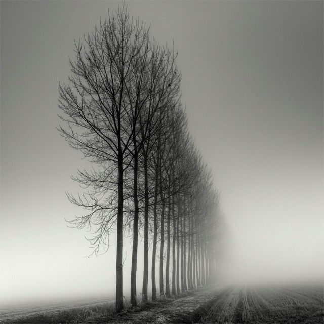 Long Exposure Tree Landscapes by Pierre Pellegrini