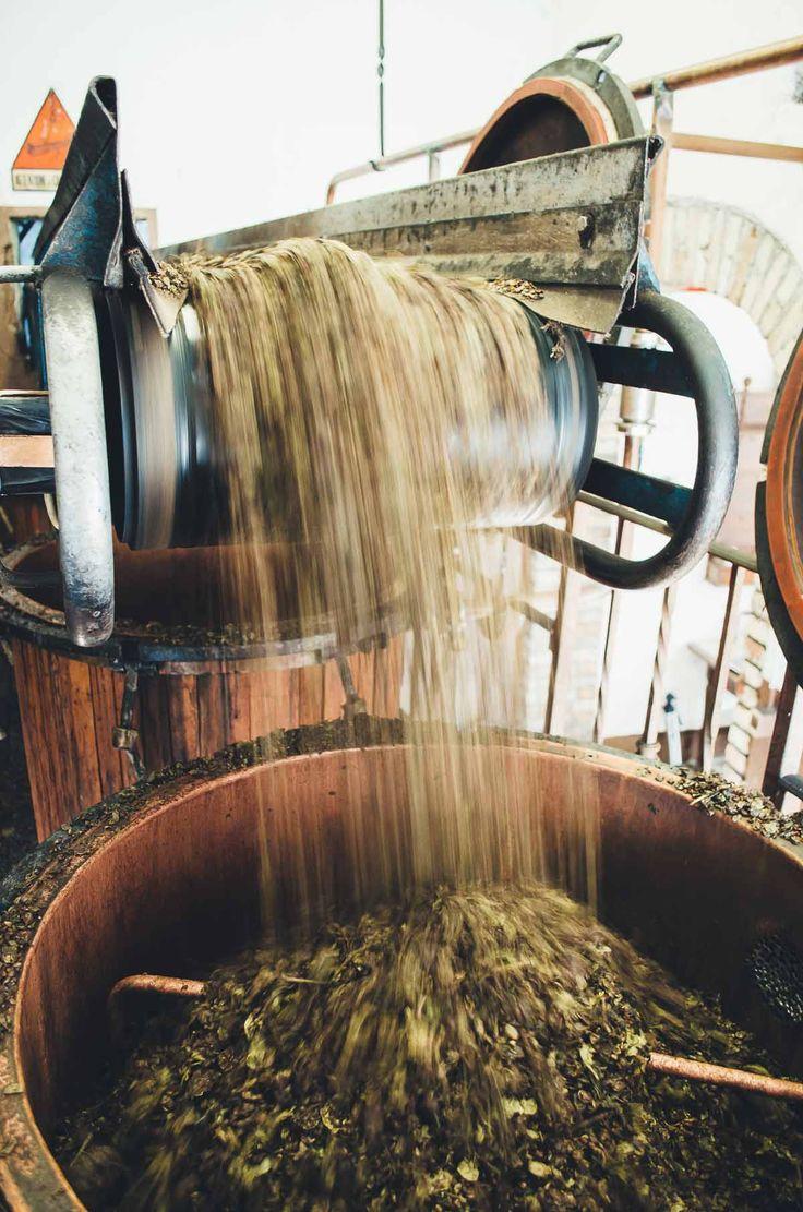 Behind the Scenes of a Grappa Distillery | Very EATalian