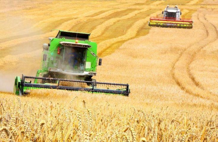 План по сбору зерна превышен в Челябинской области - Новости 24 часа - MyNewsOnline24.ru