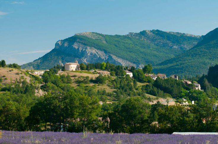 Champ de lavande à Saléon, Provence, Hautes-Alpes, PACA