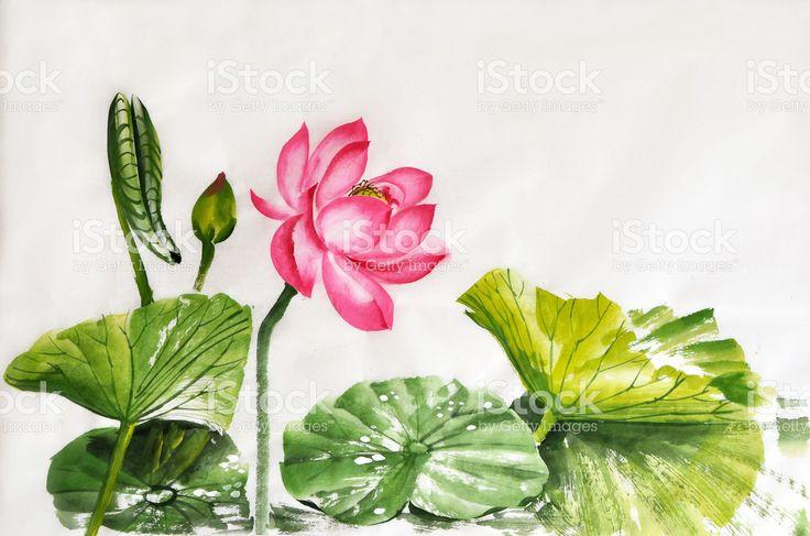 Лотос цветок Акварельная живопись Сток Вектор Стоковая фотография