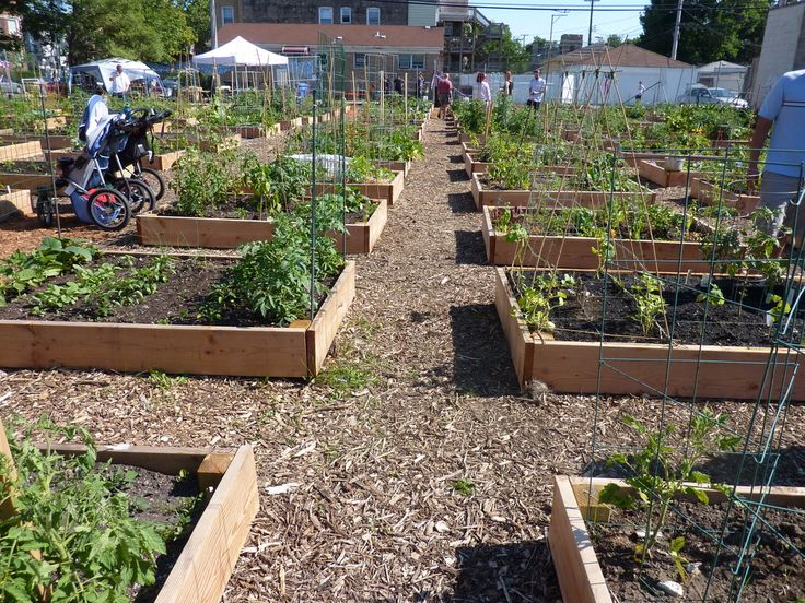 Community Garden Design Chicago S Urban Farming Movement