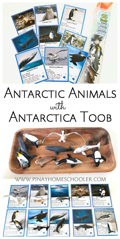 Using Safarit Toob Antarctica animal figures
