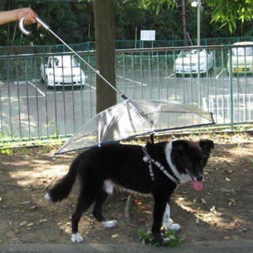 Pet Umbrella (Dog Umbrella) Keeps your Pet Dry and Comfotable in Rain, Happy Pet Travel,http://www.amazon.com/dp/B000T0JUE8/ref=cm_sw_r_pi_dp_8T7Dtb1CCX067G98