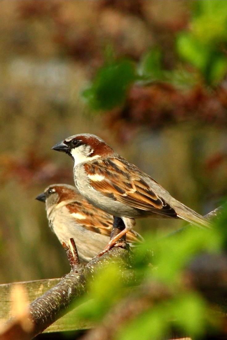26 best backyard birds of texas images on pinterest backyard