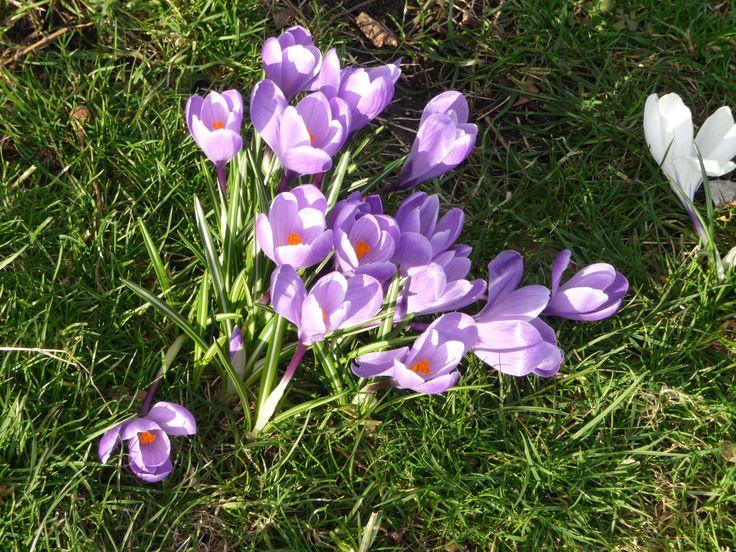 Lovely spring in St- James' Park #London