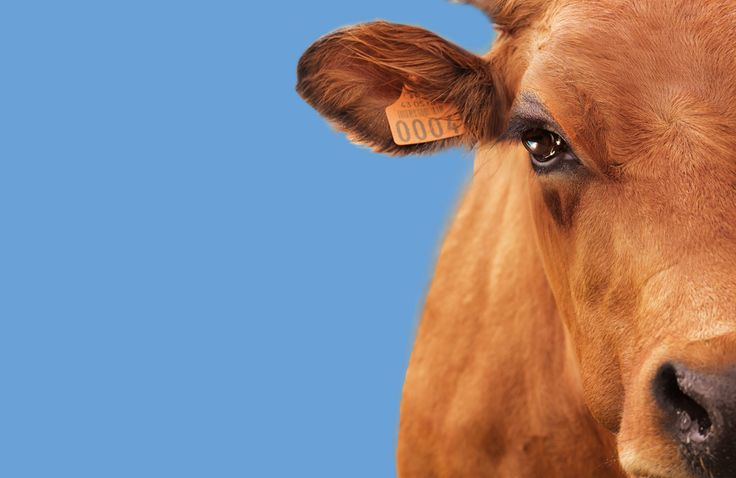Paris International Agricultural Show - From 22 February to 2 March 2014 - Paris Expo Porte de Versailles