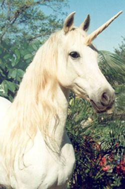 want a unicorn