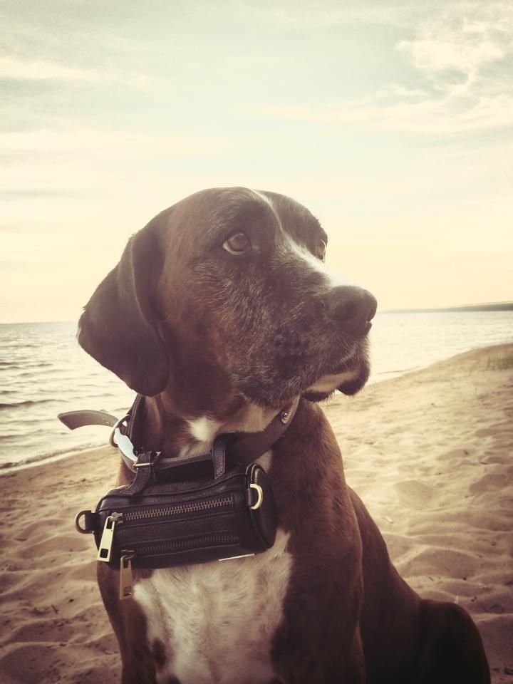 Your buddy can assist to carry your MERÏKH handbag with elegance :)  #MERÏKH #Multifunctionalbag #Handbag #Leashbag #Beltbag #Leatherbag #Petbag #Finland #Summer