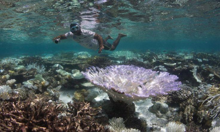 KORALLREVET DØR: En dykker undersøker blekingen av koralrevet i havet utenfor Maldivene. Halvparten av The Great Barrier Reef har ifølge en korallekspert dødd de siste to åra. Foto: The Ocean Agency / XL Catlin Seaview Survey / AP / NTB Scanpix
