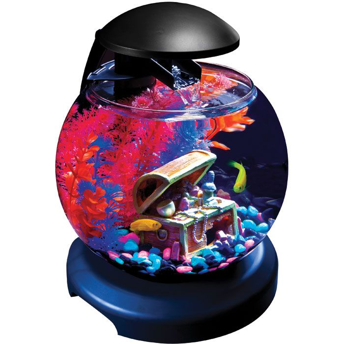 17 Best Images About Project Fish Tank On Pinterest: 17 Best Images About GloFish® On Pinterest