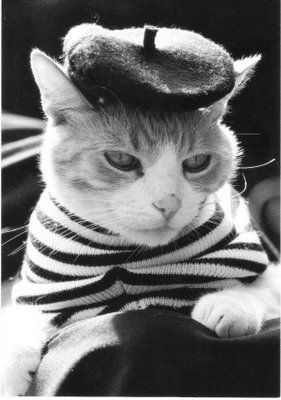 France cats: Paris, French Kitty, French Cat, Pet, Le Chat, Frenchcat, Berets, Lechat, Animal