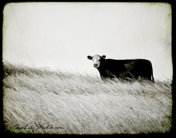 One Cow Hill 16x20 : cow photo black and white photography nature farm cattle ranch cowboy home decor fine art print on Etsy, $75.00