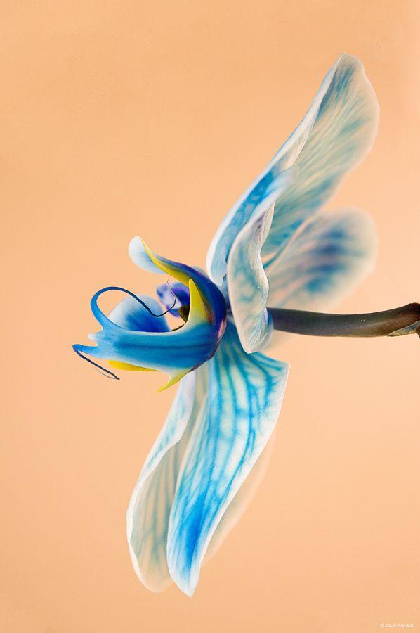 les 56 meilleures images du tableau images pour cartes (orchidées