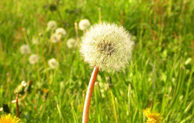 Er din græsplæne plaget af mos, ukrudt, muldvarpeskud eller visne pletter? Læs her, hvordan du slipper af med problemerne ved at give plænen en skønhedskur.
