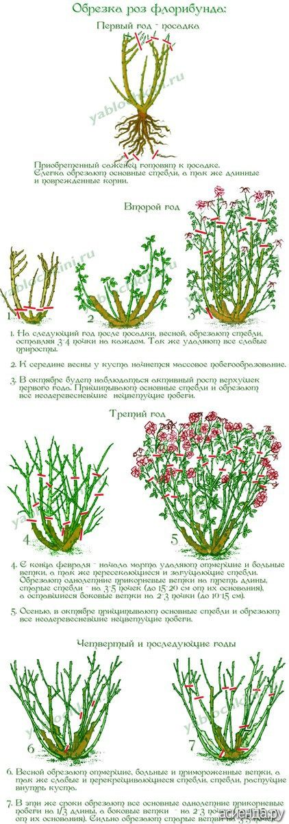 Информация взята с сайтовhttp://www.garden08.ru/useful/pruning_rose.phphttp://yablochkini.ru/vyrashhivaem-cvety/roza/obrezka-roz.html...