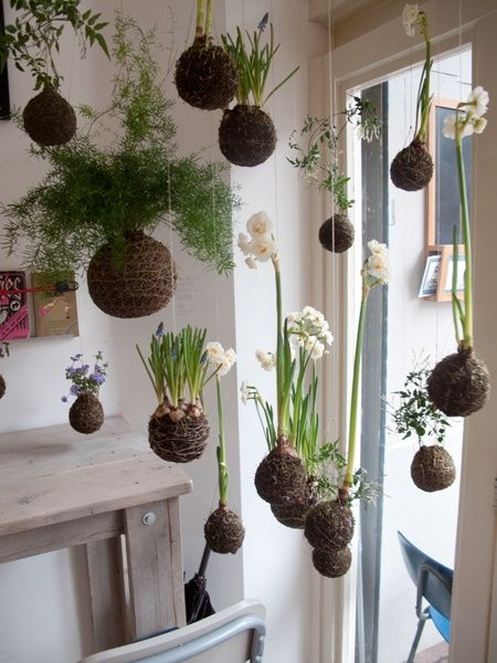 "I stumbled upon a really cool indoor gardening concept the other day – string gardens. ""Kokedama"" is basically the Japanese art of enclosing a plants roots in a moss ball and suspending that plant – sort of a hanging bonsai concept."