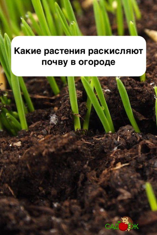 чем снизить кислотность почвы