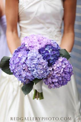 love purple hydrangea.. i think this is what Im going with!