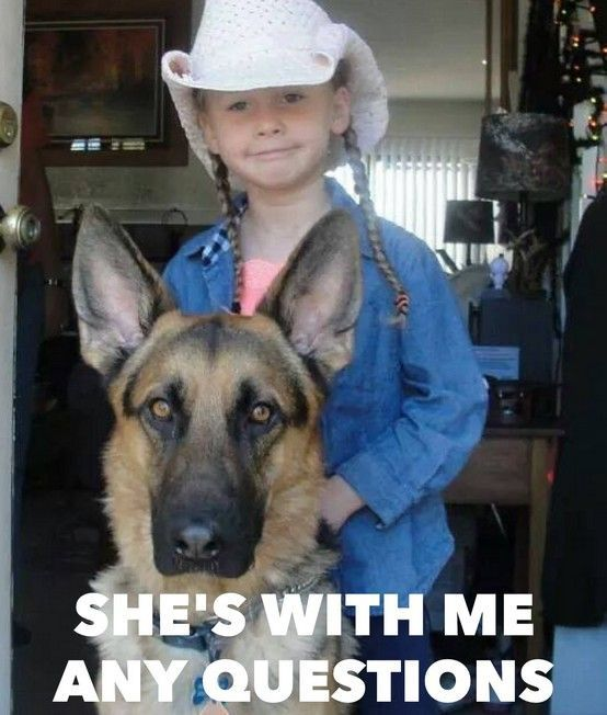 The German Shepherd: She's with me. Any questions?  LOL german shepherd funny pictures