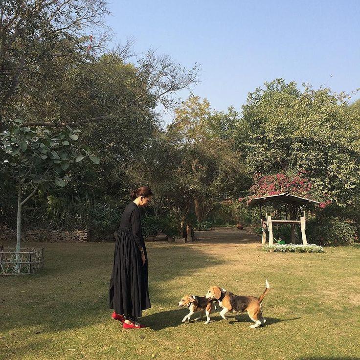 インドは犬も人懐こい #jaipur #ワンコ #インド by houseoflotuskaren