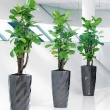 Looking for the best indoor & office plants hire company in Melbourne? Then no need to worry, Foliage Indoor Plant Hire is an experienced company offering best interior plant design services to meet your needs.