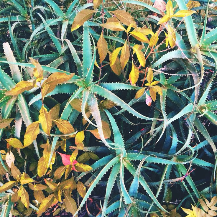Pretty plants
