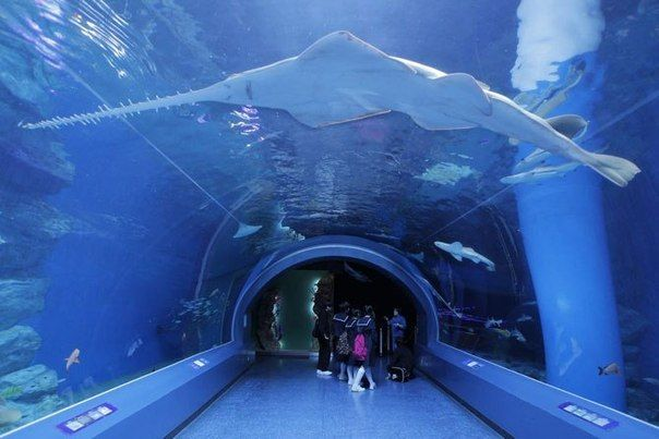 "Рыба меч в японском окенариуме. Гигантский аквариум, а точнее - океанариум - ""Окинава Тюрауми"" находится в Японии, на небезызвестном острове Окинава."